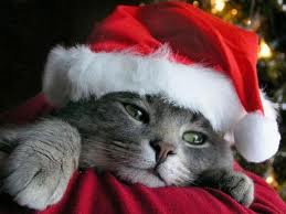 Gatto di Natale....