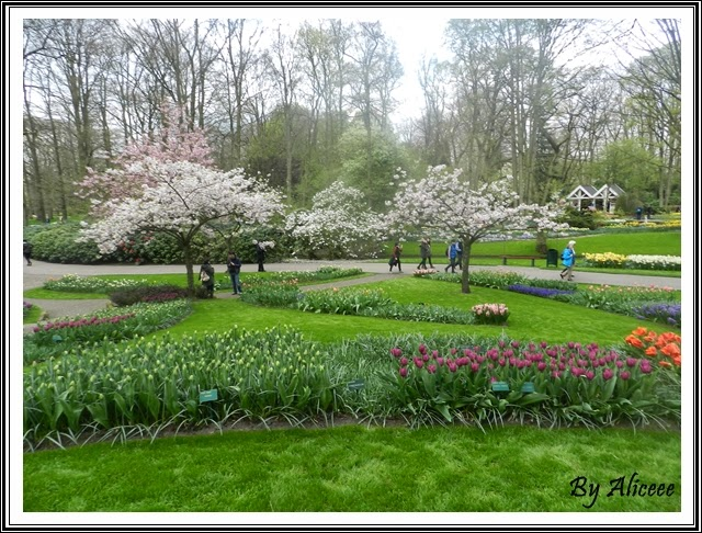 keukenhof-garden-sakura