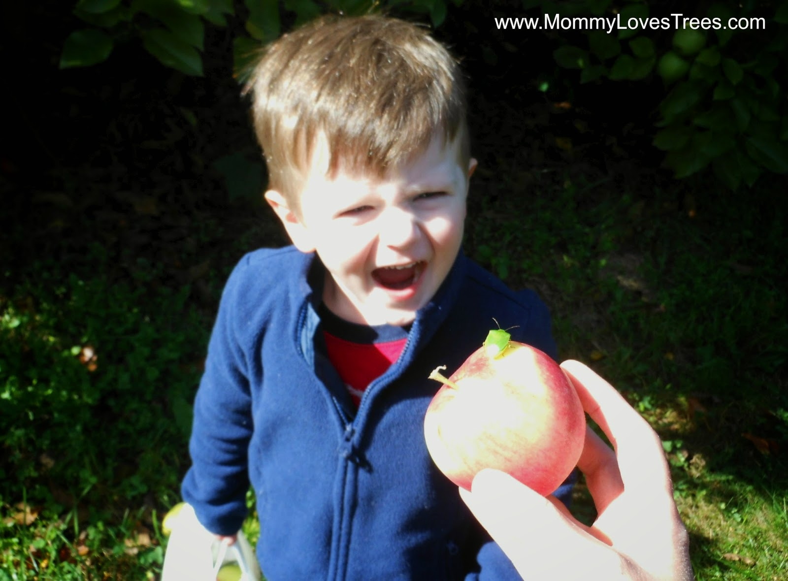 Apple Picking: Adding Adventure Without Adding Cost.
