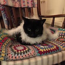 Meet Furry Frank