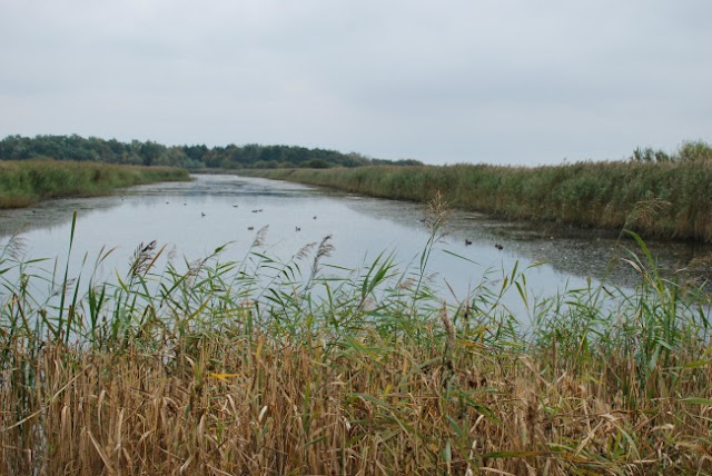 birds on river with grasses in front