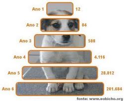 Esterilize seu animalzinho. Pense nisso: em 6 anos, serão cerca de 200.000.