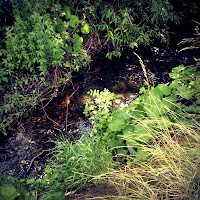 Babbling Stream we saw on our Fun Family Walk