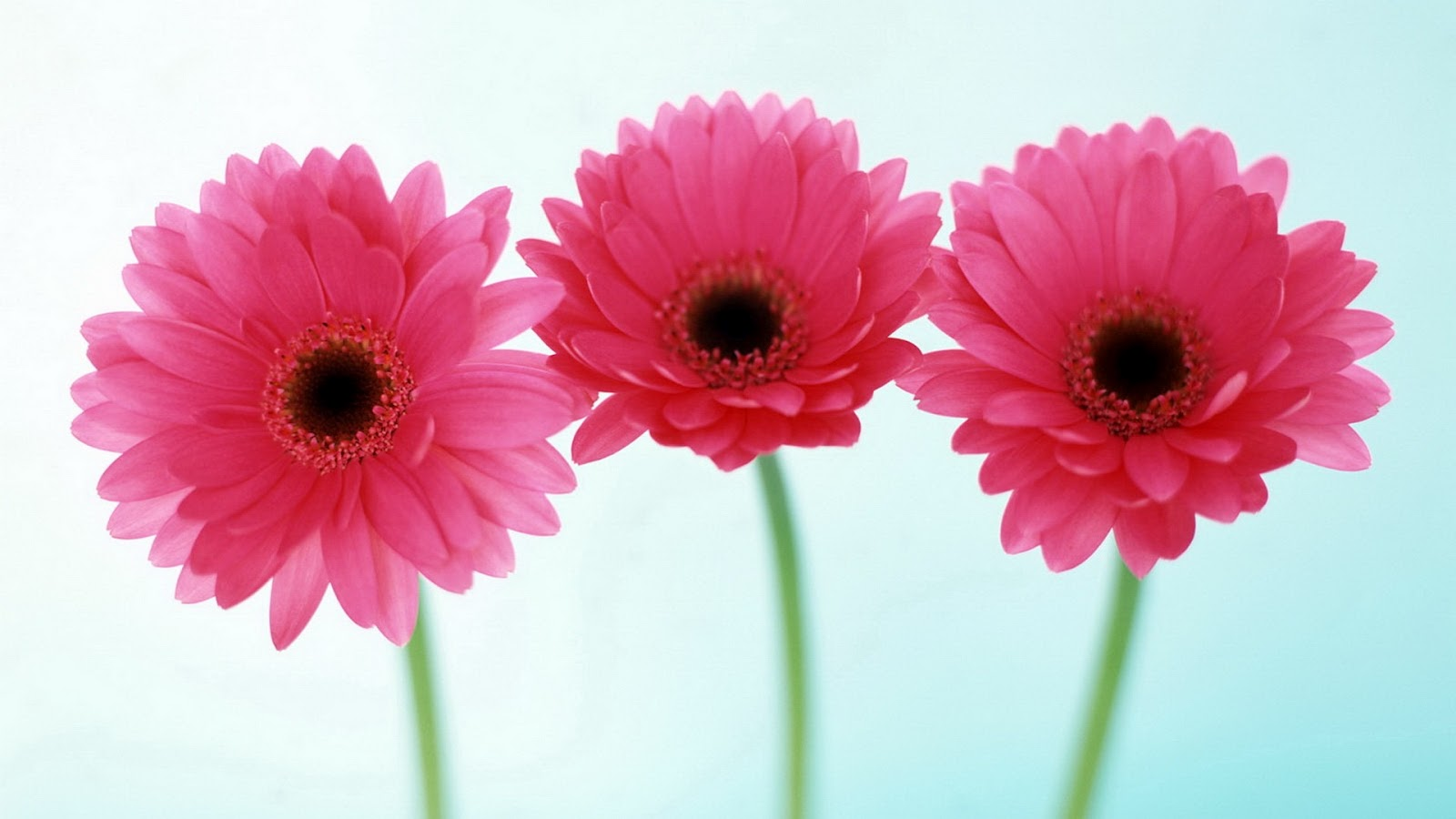 Flowers For Flower Lovers HD Wallpapers