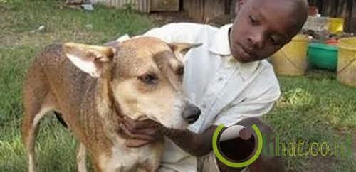 Seekor anjing yang menyelamatkan bayi yang terbuang