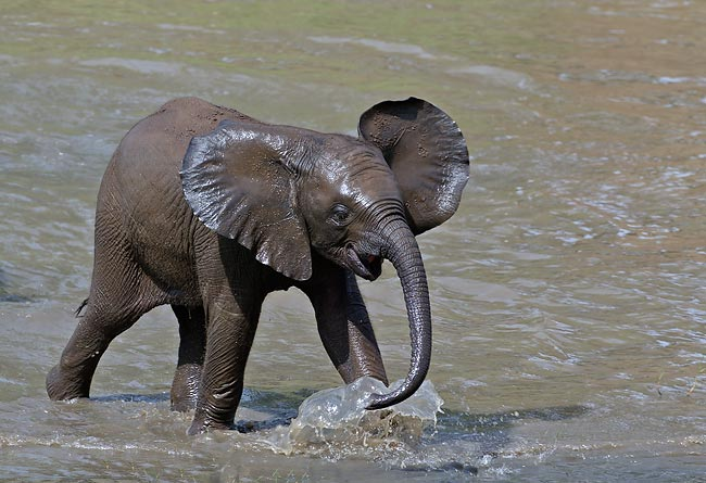 Baby elephants high quality wallpapers free download - Baby elephant wallpaper ...