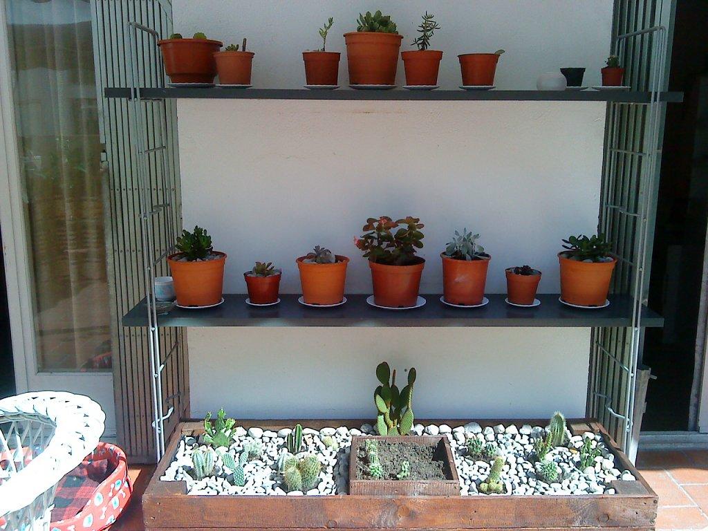 Puerta al sur decor tu casa con plantas suculentas o - Decoracion y hogar ...