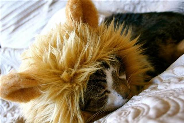kucing tidur pakai topi
