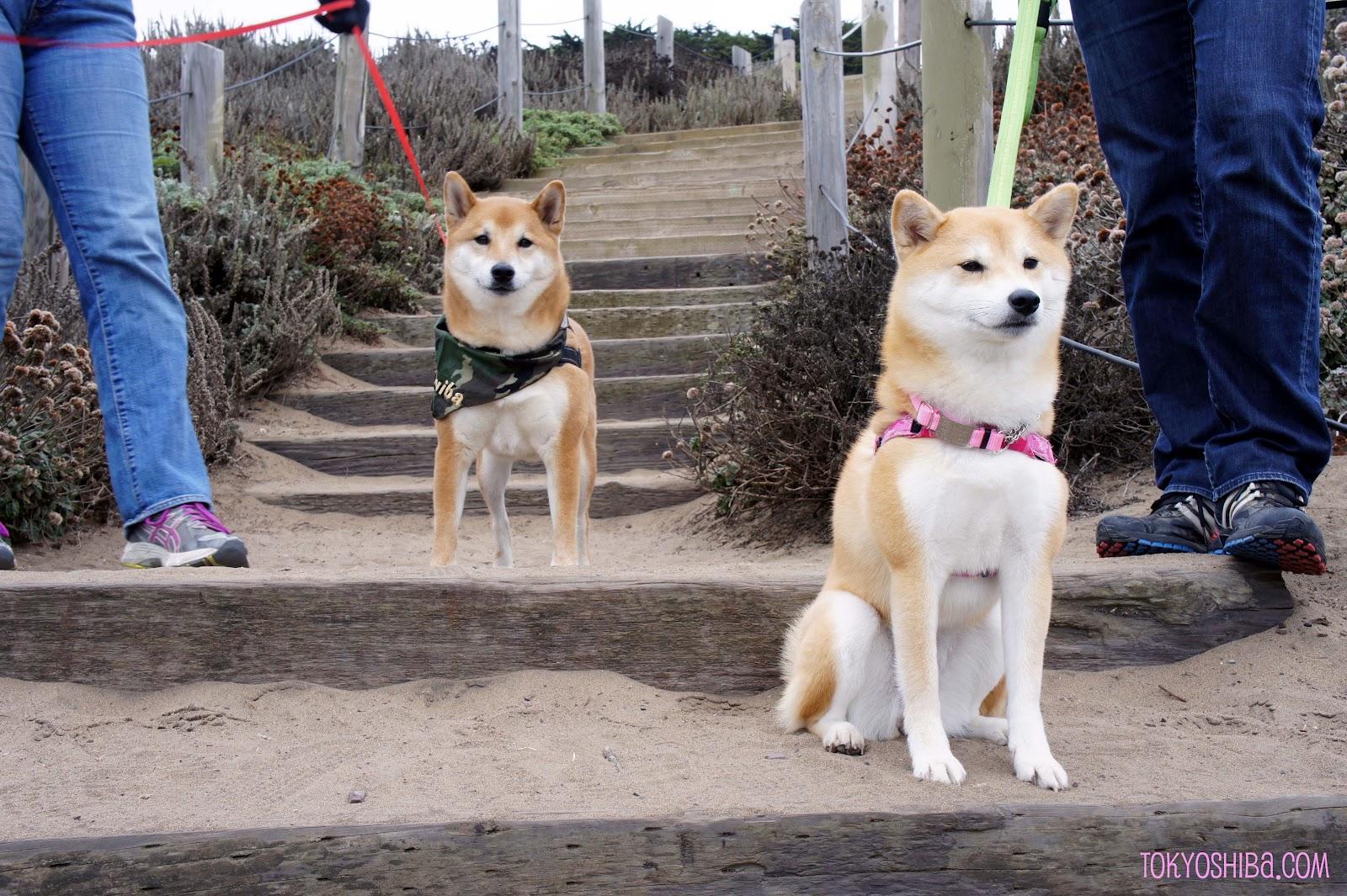 Dog Friendly Hikes Near Redondo Beach