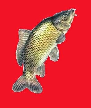 Tips Dan Trik Mancing Ikan Mas