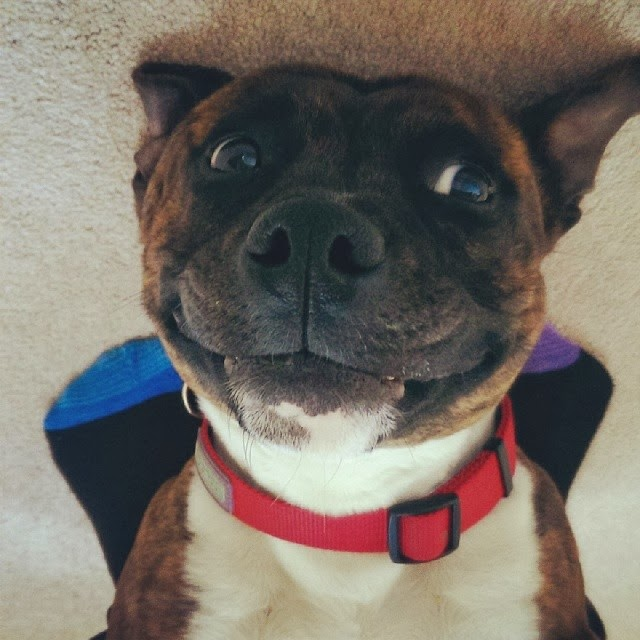 Cute dogs - part 9 (50 pics), upside down smiling dog