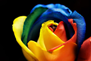 rainbow+rose+3 A Gift of Survival........