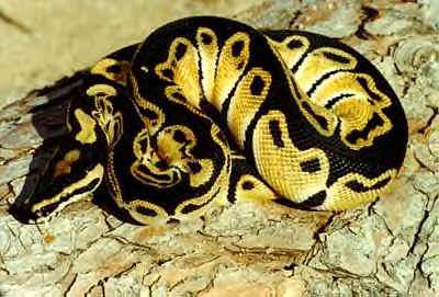 todo tipo de serpientes