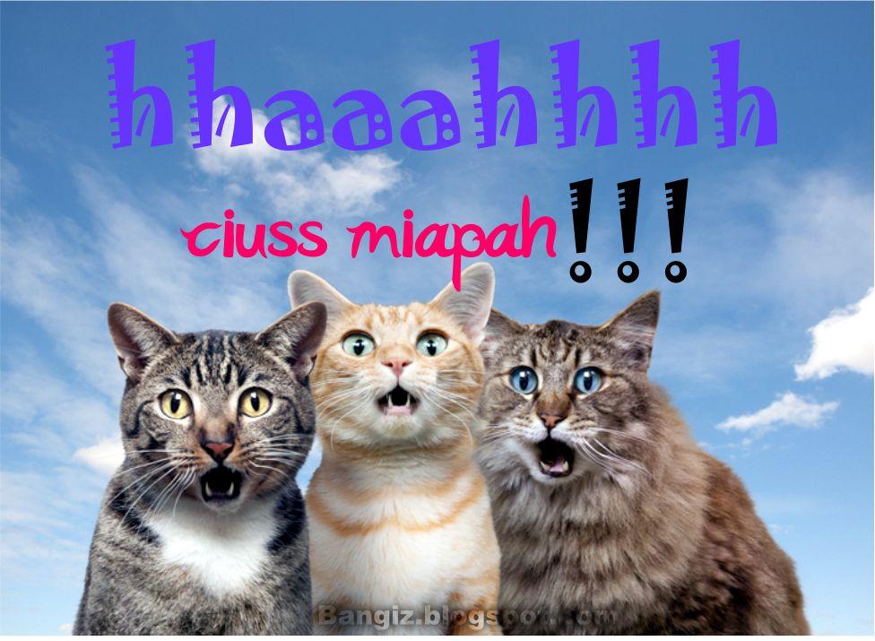 Wallpaper Gambar Kucing Dengan Kata Kata | Bangiz