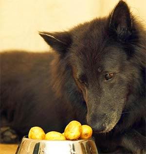 Cachorro pode comer batata?