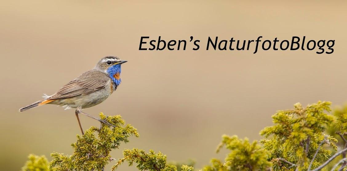 Esben's Naturfotoblogg