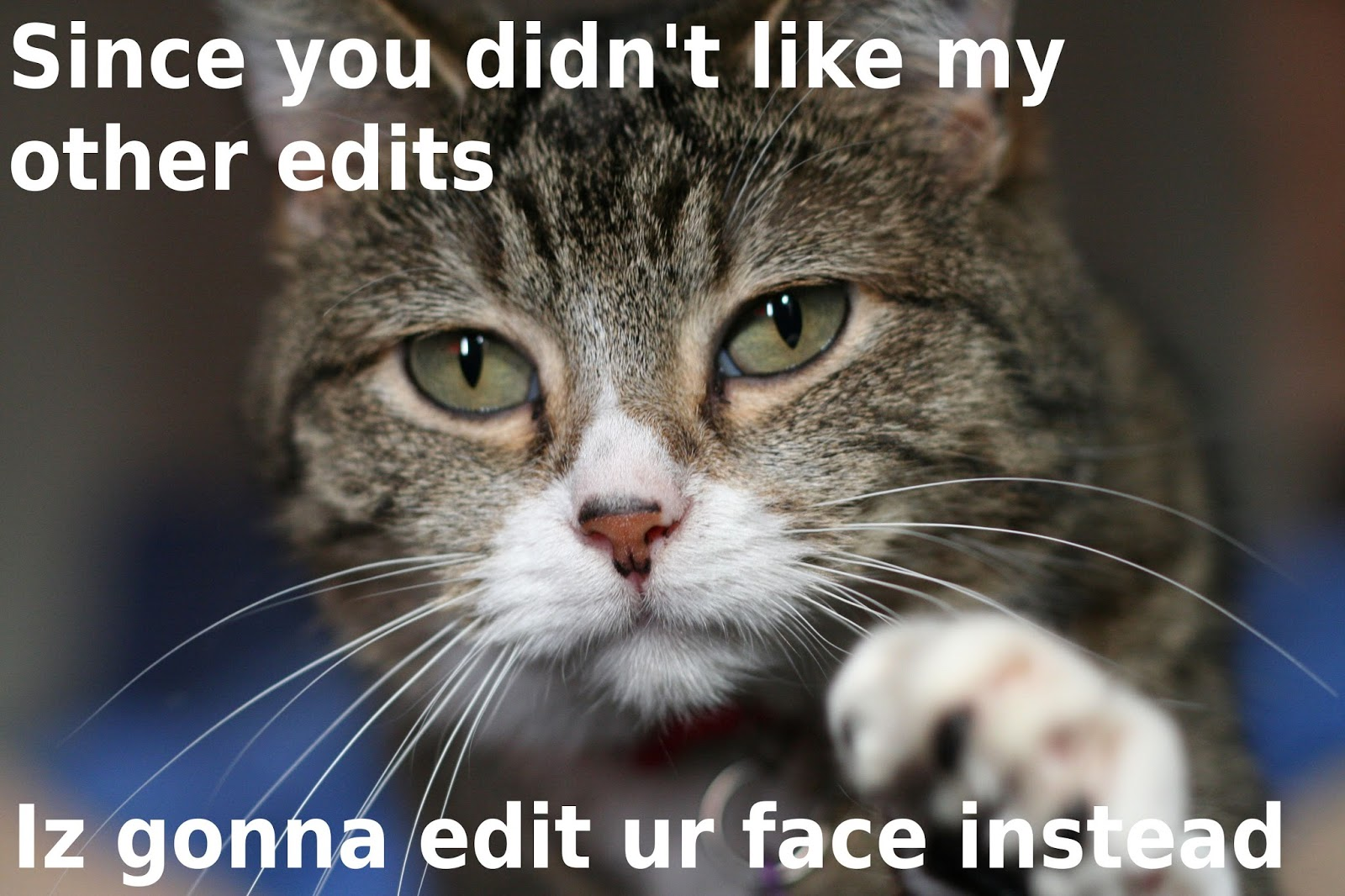 """Funny cat jokes """"Origin of name Cats"""" 