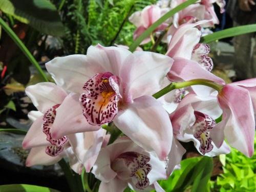 Philadelphia Flower Show 2015- orchid