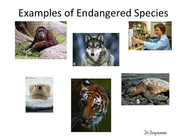 endangered species 4 essay What is known as the endangered species act began in mid-1960 in order for the fish and wildlife service to expand their efforts to protect endangered species, congress enacted the endangered species preservation act of 1966.