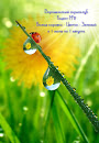 Рецепт №2 Божья коровка зеленый цветок