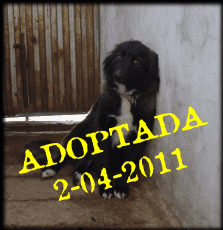 Trufa adoptada