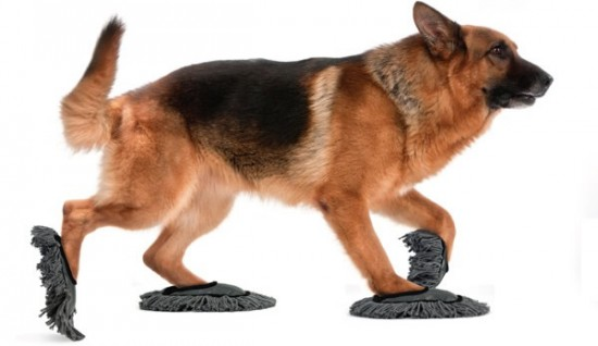 15 Awesome Dog Products and Gadgets