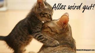 zwei katzen kuss auf die stirn alles wird gut.