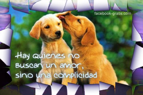 Perros con mensaje de amor