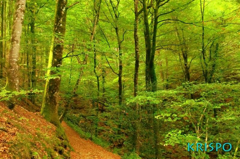 arboles en otoño en monte de Euskal Herria