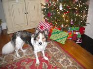 Juno Pup