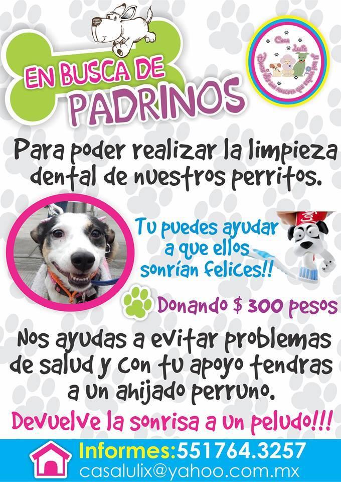 BUSCANDO PADRINOS
