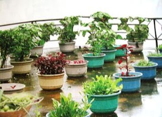 Design kitchen garden ideas tips in pakistan india for Terrace garden in india