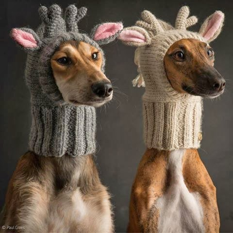 Free Crochet Dog Reindeer Hat Pattern : My Handmades: Deer with little antlers hat