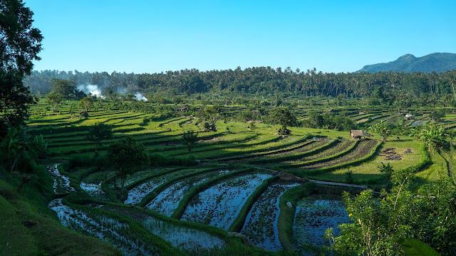 Rice terraces in Sidemen
