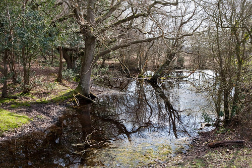 Ipley - New Forest by Chalkie_CC