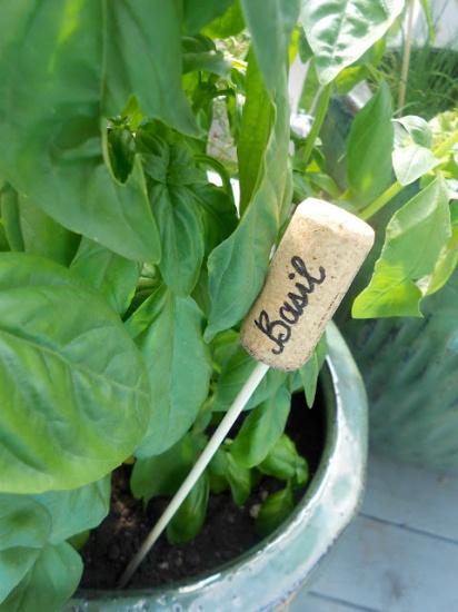 poner el nombre a las plantas aromaticas