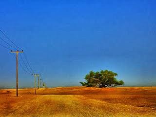 Pohon ini hidup di tengah gurun pasir, dan jauh dari sumber air, Wow!