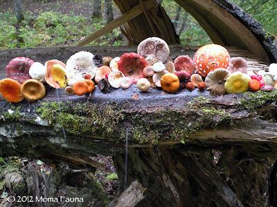 A Mycophile's Moon Shrine.