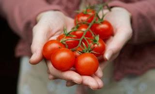 Makan Tomat Bikin Awet Muda