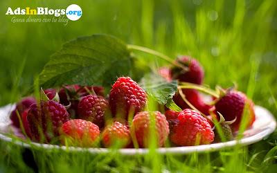 Frambuesas frescas del huerto - Fresh Raspberry - Wallpaper de 1920x1200px