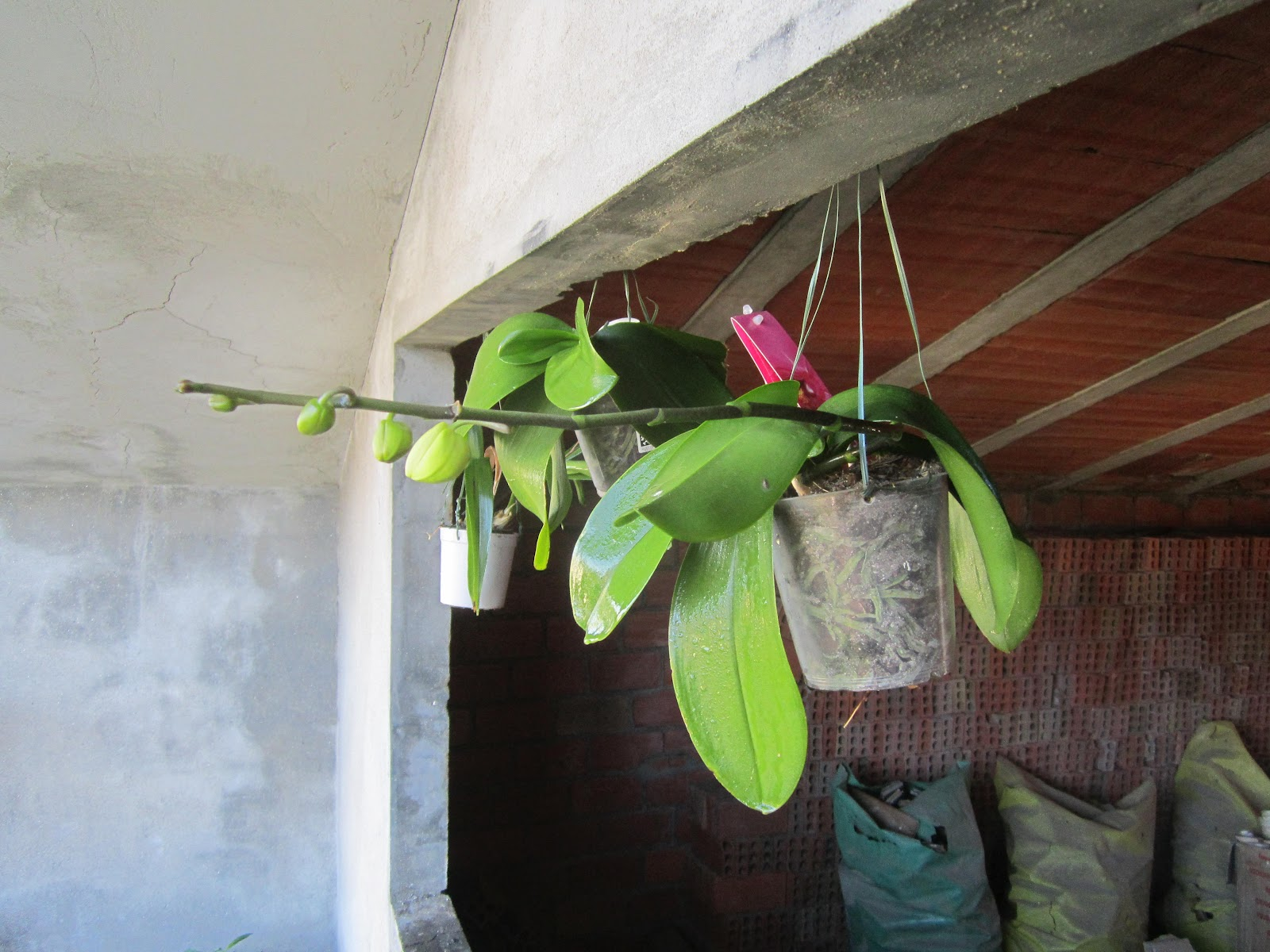 Asombroso Orquídea Laca De Uñas Profesional Composición - Ideas Para ...