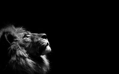 Профилна снимка Лъв