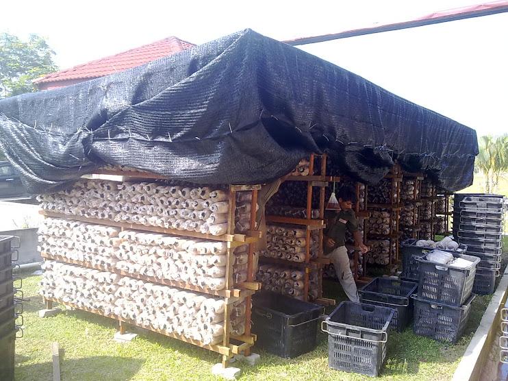 Package Rumah Cendawan Dgn 5000 Beg Media cendawan.Rm 5500