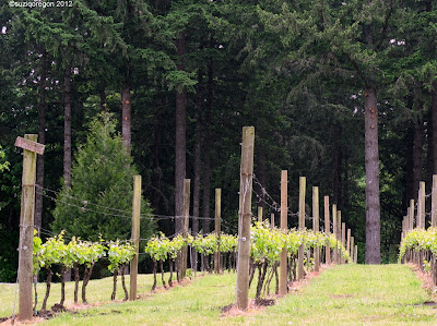 Vineyard at ADES