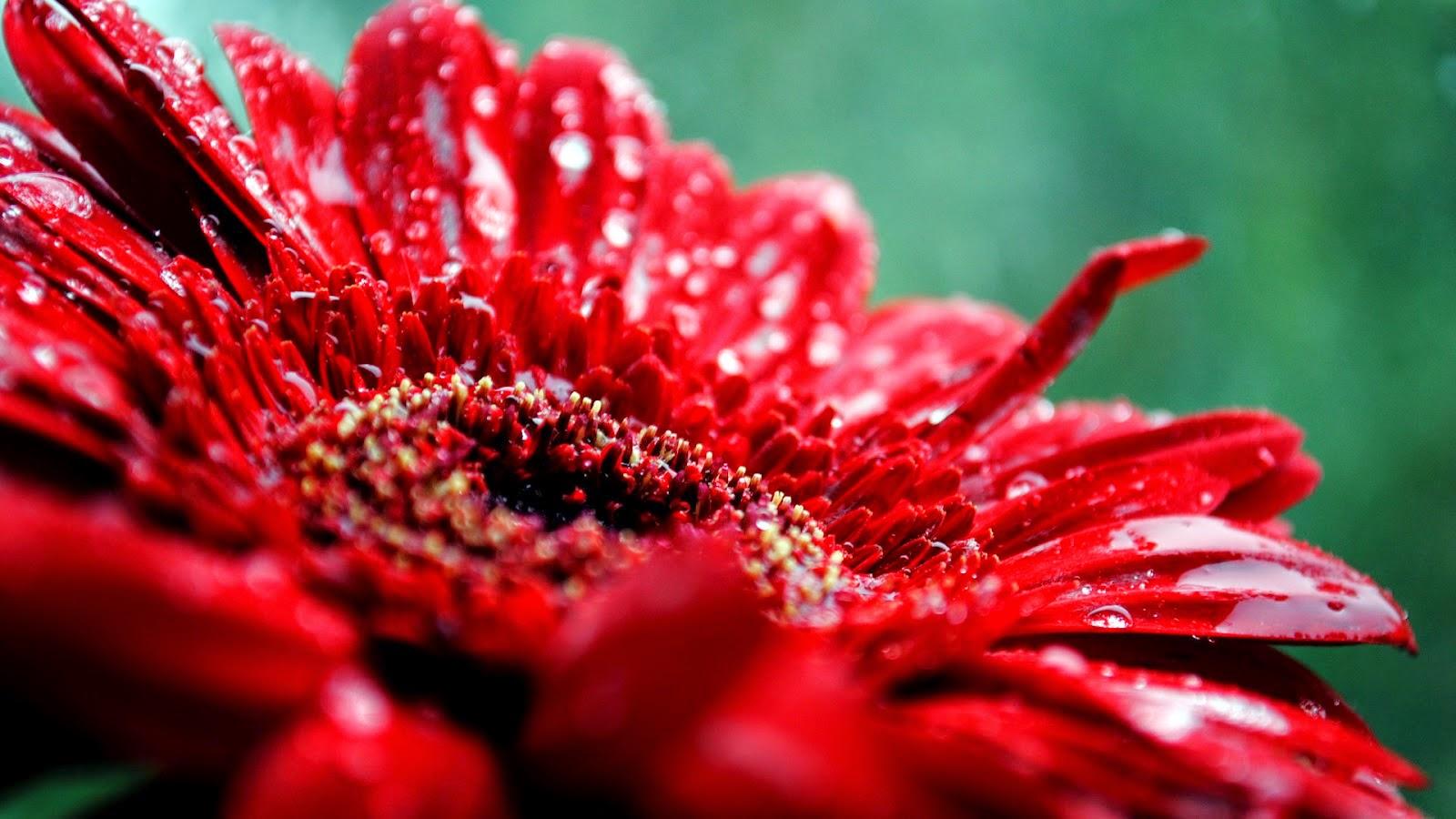 Flores Rojas, parte 2