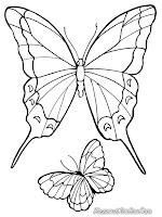 Gambar kupu-kupu mengepakan sayap indahnya