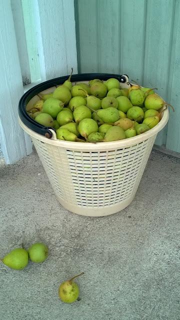 Päärynäpannukakku Taivassalon päärynöistä