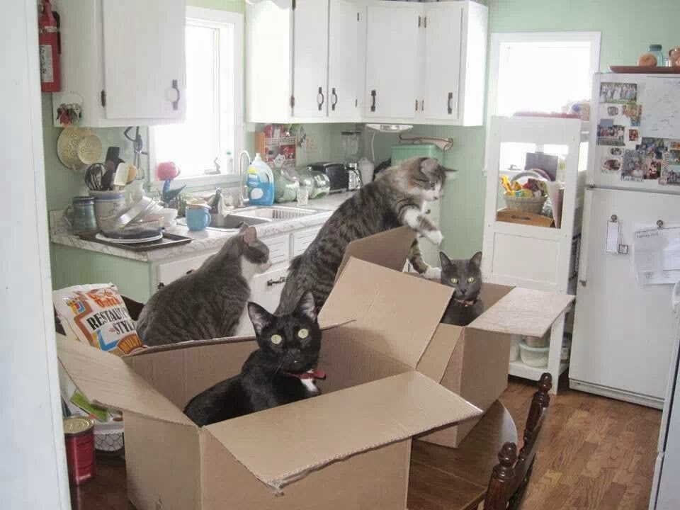 Funny cats - part 91 (40 pics + 10 gifs), cats playing with boxes