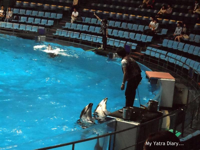 Aquarium casino versus japan