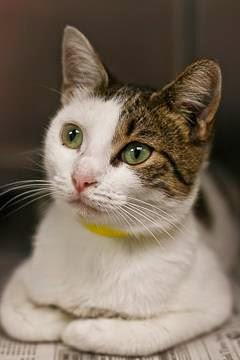 Cat ID 24070504 Petango.com